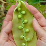 giant-peas