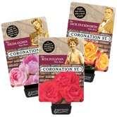 Coronation Street Roses
