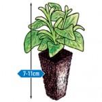 super plug plant