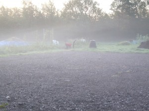 Mist on the allotment