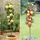 apple, pear, cherry and plum