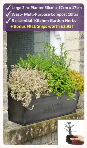 Kitchen Garden Herb Kit