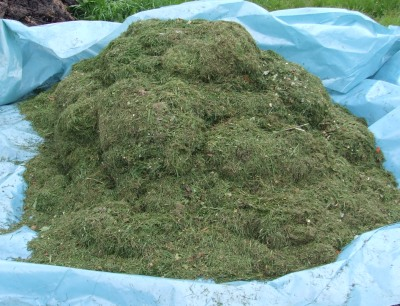 Big pile of grass clippings