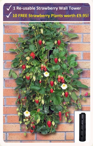 Strawberry Wall Tower