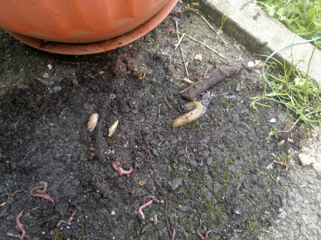 What lives under your plant pots