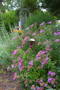 Low maintenance relaxed planting is ideal for a busy lifestyle