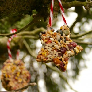 homemade bird food